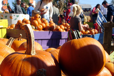 Selecting pumpkins at Cox Farms - Centreville, VA ... October 15, 2006 ... Photo by Rob Page III