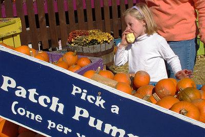 Picking a pumpkin - Centreville, VA ... October 15, 2006 ... Photo by Emily Conger