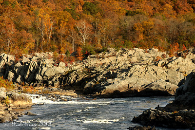Fall colors along the Potomac - Great Falls Park, VA ... October 26, 2009 ... Photo by Rob Page III