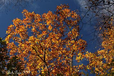 Shenandoah NP, VA ... September 24, 2010 ... Photo by Rob Page III