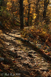 Meandering through the autumn forest -  Shenandoah NP, VA ... September 24, 2010 ... Photo by Rob Page III