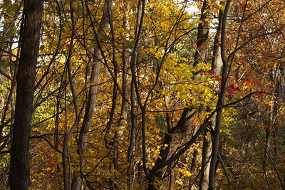 The autumn colors - Shenandoah NP, VA ... November 1, 2008 ... Photo by Rob Page III