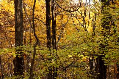Autumn in the woods - Shenandoah NP, VA ... November 1, 2008 ... Photo by Rob Page III