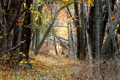 The pathway through the forest - Shenandoah NP, VA ... November 1, 2008 ... Photo by Rob Page III