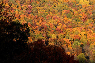 A mosaic of coloful trees - Shenandoah NP, VA ... November 1, 2008 ... Photo by Rob Page III