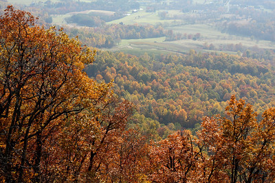 Autumn colors burst across the hillside - Shenandoah NP, VA ... November 1, 2008 ... Photo by Rob Page III