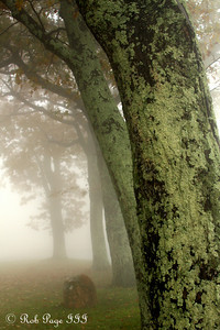 The fog rolls in - Shenandoah NP, VA ... October 17, 2009 ... Photo by Emily Page