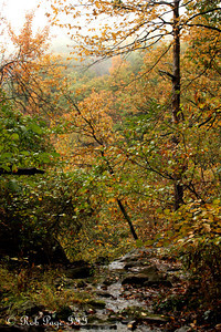 Autumn foliage - Shenandoah NP, VA ... October 17, 2009 ... Photo by Emily Page
