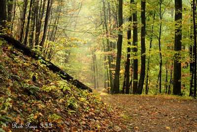 Autumn foliage - Shenandoah NP, VA ... October 17, 2009 ... Photo by Rob Page III