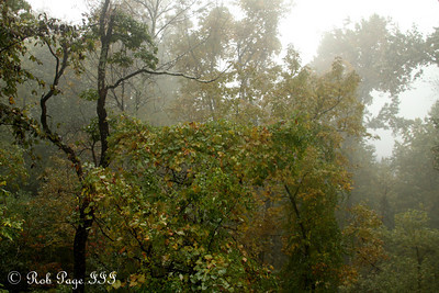 Fog shrouds the forest - Shenandoah NP, VA ... October 18, 2009 ... Photo by Rob Page III