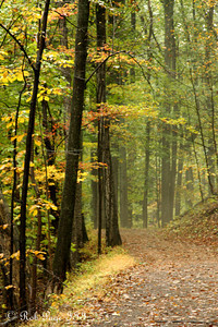 Autumn - Shenandoah NP, VA ... October 17, 2009 ... Photo by Rob Page III
