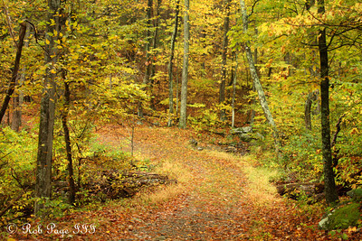 Through the woods... - Shenandoah NP, VA ... October 17, 2009 ... Photo by Rob Page III