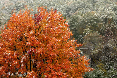 Fall colors pop under a dusting of snow - Shenandoah NP, VA ... October 18, 2009 ... Photo by Emily Page