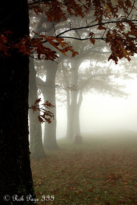 The creepy fog - Shenandoah NP, VA ... October 17, 2009 ... Photo by Emily Page