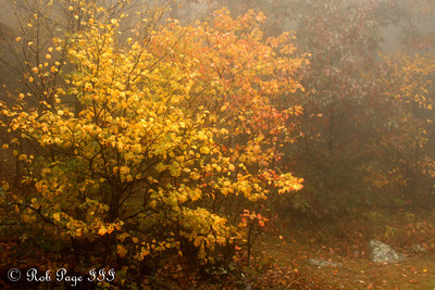 Fall foliage - Shenandoah NP, VA ... October 17, 2009 ... Photo by Rob Page III