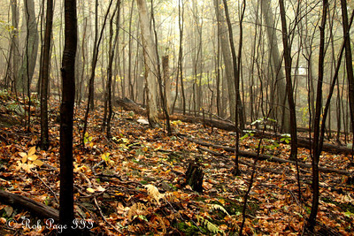 Enjoying a foggy afternoon - Shenandoah NP, VA ... October 17, 2009 ... Photo by Rob Page III