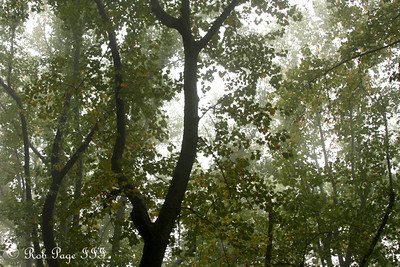 A foggy afternoon - Shenandoah NP, VA ... October 17, 2009 ... Photo by Rob Page III