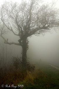 Fog makes everything creepy - Shenandoah NP, VA ... October 17, 2009 ... Photo by Rob Page III