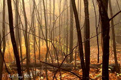 The fog beads on the branches - Shenandoah NP, VA ... October 17, 2009 ... Photo by Rob Page III