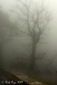 Creepy fog - Shenandoah NP, VA ... October 17, 2009 ... Photo by Rob Page III