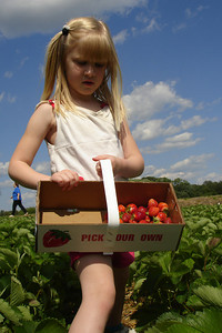 Laura picking strawberries - Richmond, VA ... May 19, 2007 ... Photo by Rob Page III