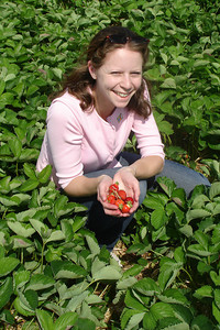 Emily picking strawberries - Richmond, VA ... May 19, 2007 ... Photo by Rob Page III