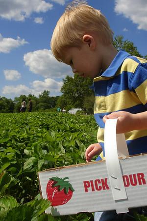 Strawberry Picking - 2007