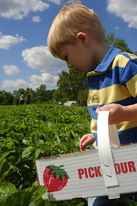 Michael picking strawberries - Richmond, VA ... May 19, 2007 ... Photo by Rob Page III