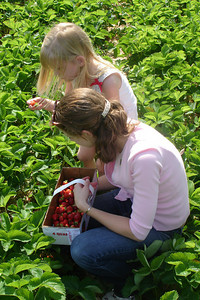 Emily and Laura picking strawberries - Richmond, VA ... May 19, 2007 ... Photo by Rob Page III