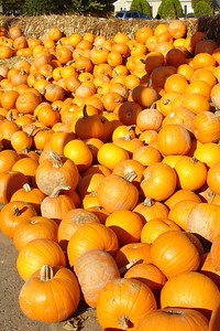 The Pumpkin Patch - Virginia ... October 28, 2007 ... Photo by Emily Conger