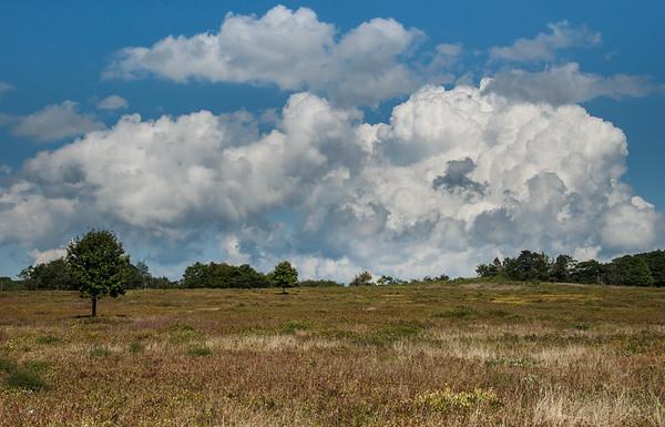 Big Meadow, Shenandoah Valley, Virginia