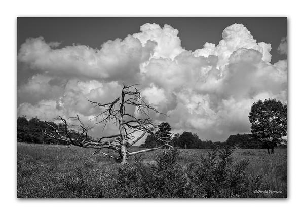 Shenandoah - Big Meadow