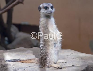 Smithsonian - National Zoo