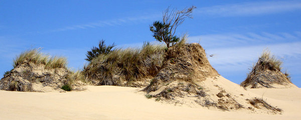 The Dunes - Oregon Sand Dunes National Recreation Area, OR ... July 29, 2006 ... Photo by Bob Page, Jr.