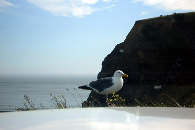 Stupid Seagull - Port Oxford, OR ... July 29, 2006 ... Photo by Rob Page III
