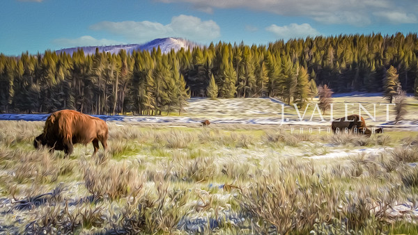 Wyoming - The Cowboy State