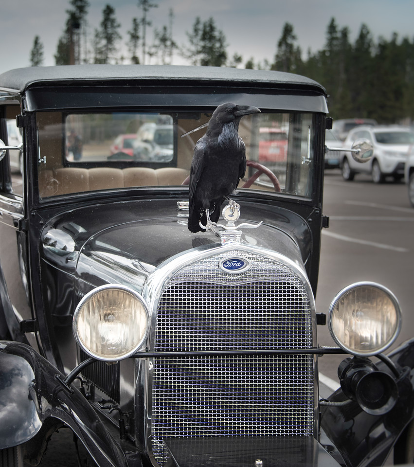 Hood Ornament, South Geyser Basin, Yellowstone National Park, Wyoming