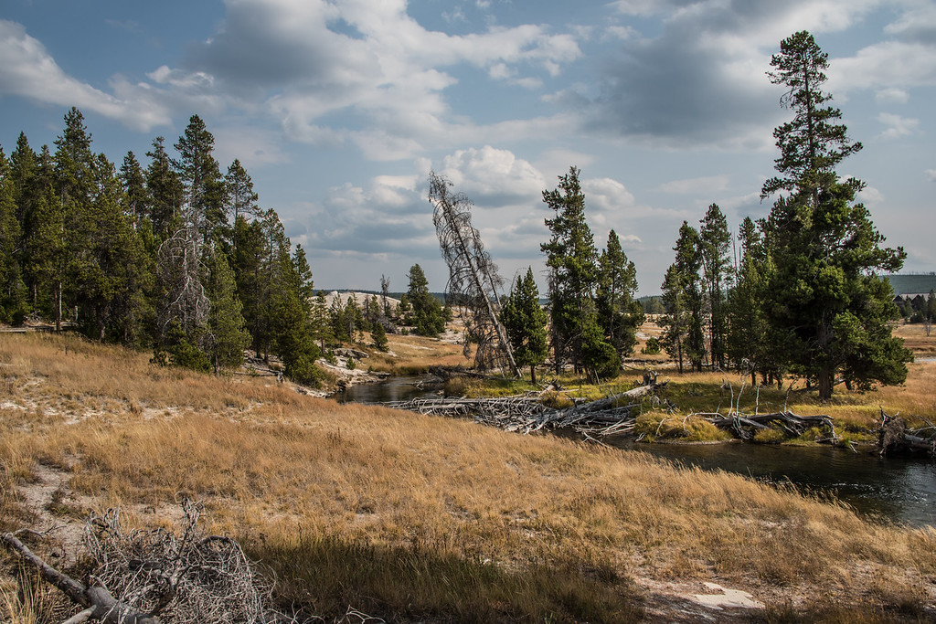 Wild Wyoming, South Geyser Basin, Yellowstone National Park
