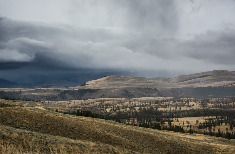 Rainy Afternoon On Road to Tower Fall, Yellowstone National Park, Wyoming