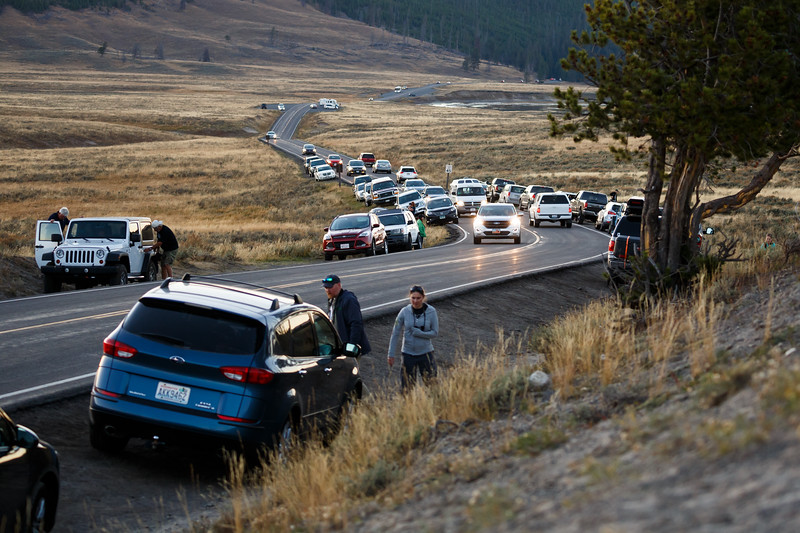 Yellowstone, Wildlife - Traffic jam in Hayden Valley from visitors pulling over to view wildlife