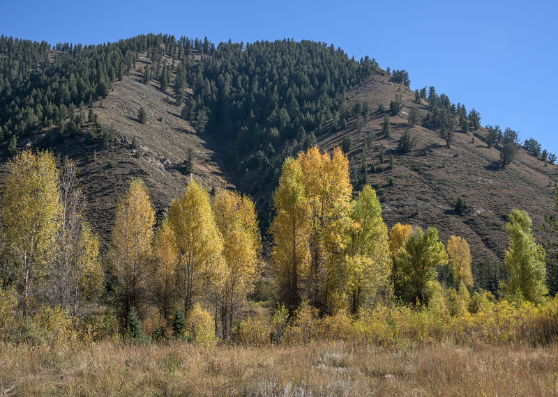 Early Fall, South of Jackson, Wyoming