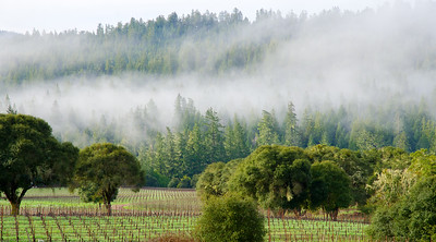 Winter Fog, Anderson Valley