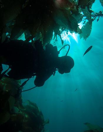 Catalina Island (2012)