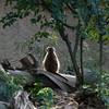 San Diego Zoo - San Diego, CA