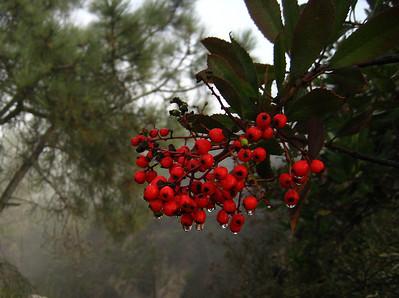 Torrey Pines (2008)