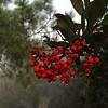 Torrey Pines - San Diego, CA