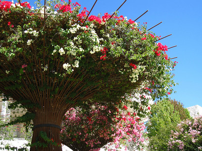 Flower filled trees, Getty Center in Los Angeles, California