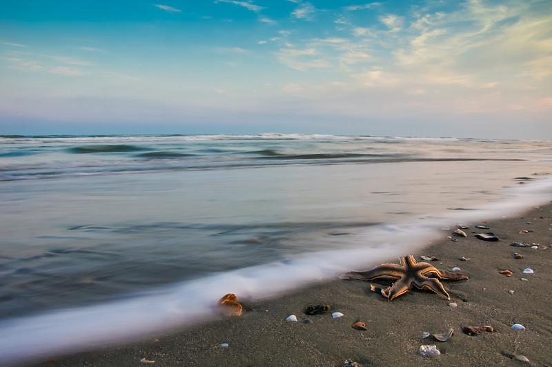 Starfish catching the waves before sunrise on Isle de Palms, SC.