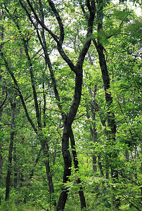 The woods at Cranberry Pond, 2006.