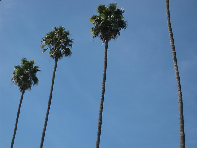 Cali Palms line the Street